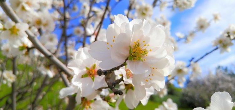 Frisch in den Frühling